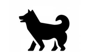 【朗報】美少女犬、発見される →画像