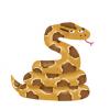【画像】10年飼われたアミメニシキヘビさん、こうなってしまう →