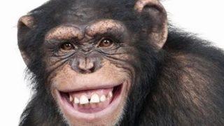 【衝撃映像】スマホを使いこなすチンパンジーwwwwwwwww